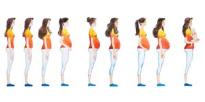 How does pregnancy change the female