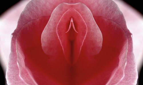pink flower depicting the appearance of the vagina