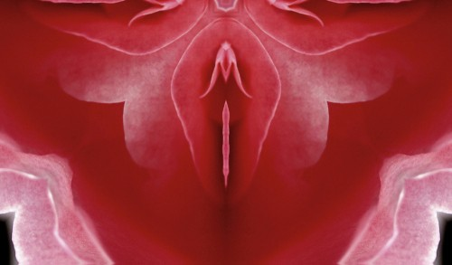 pink colored flower representing a vagina
