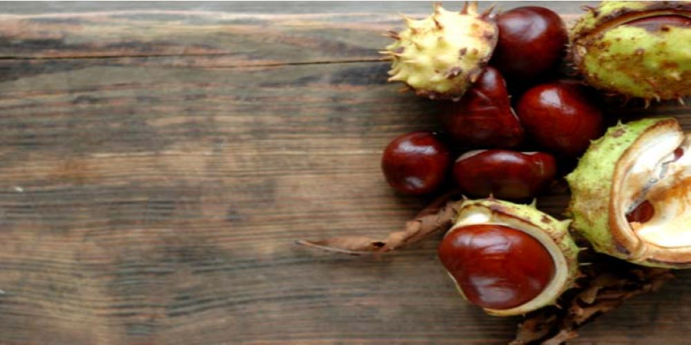 horse chestnut seeds for varicose veins