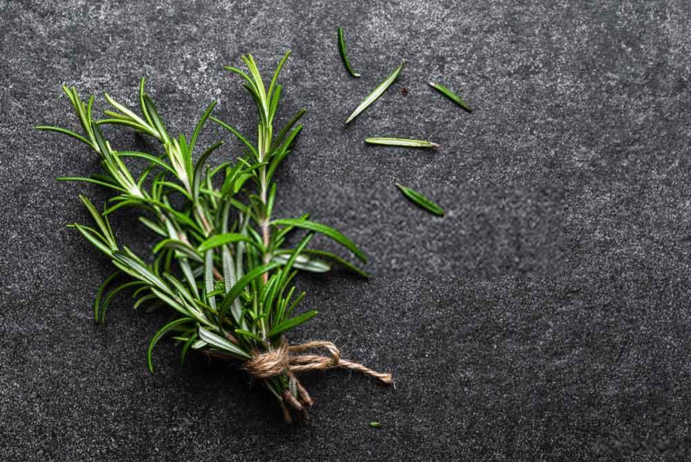 Rosemary for varicose veins