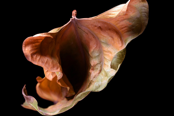 aging of vagina