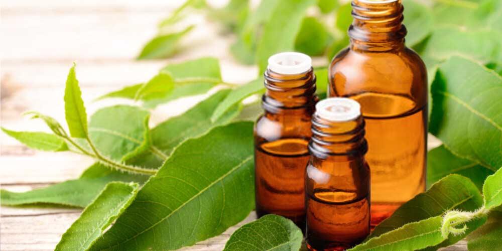 Eucalyptus oil-Essential-Oils-To-Treat-Ear