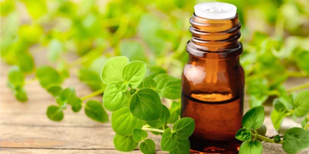 Oregano oil-Essential-Oils-To-Treat-Ear-Pain