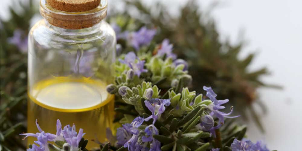 Rosemary oil-Essential-Oils-To-Treat-Ear