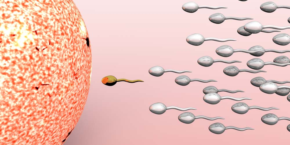 Sperms reaching to fertilize the egg