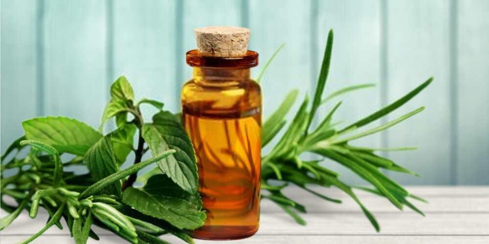 Tea tree oil-Essential-Oils-To-Treat-Ear