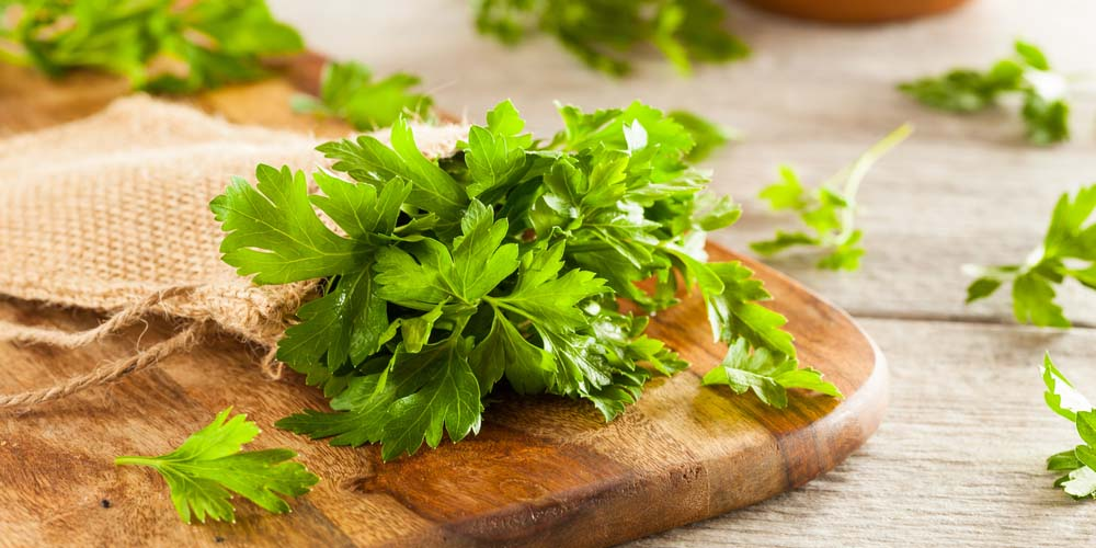 Eating Parsley can help avoid pregnancy after sex naturally