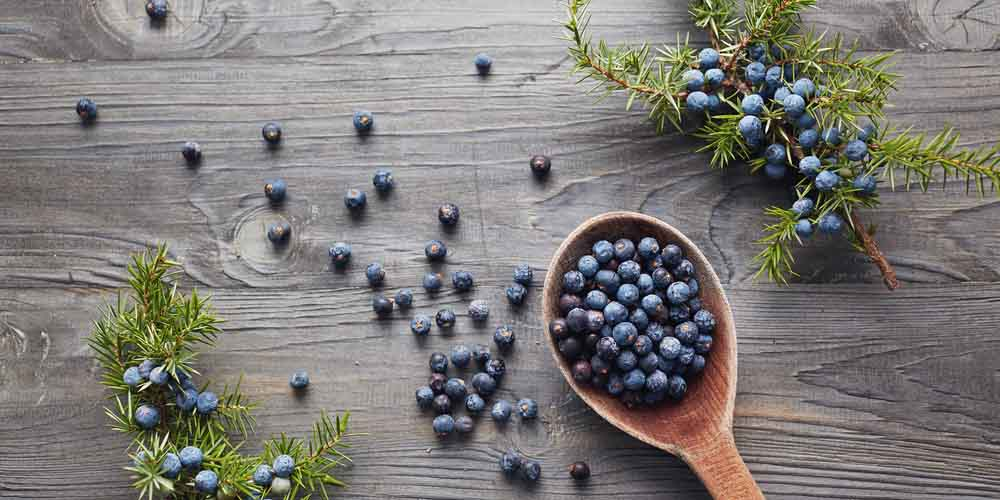Juniper berries-Kala Jamun helps to avoid pregnancy after sex naturally