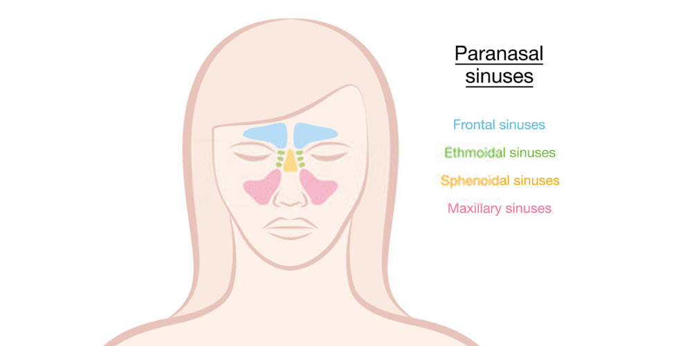 Know-About-Sinus-Pressure-Points-2