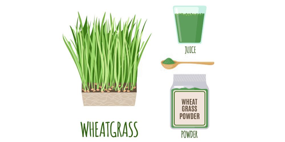 wheat grass juice for kidney stones